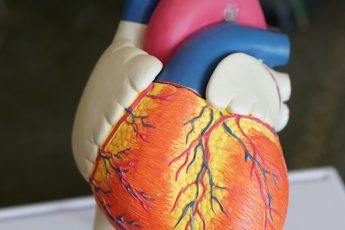 3D heart model iData